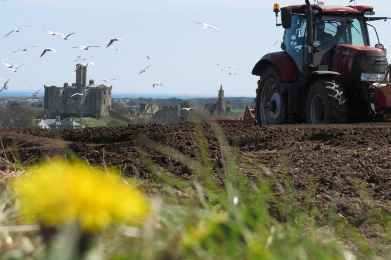 Farming potatoes