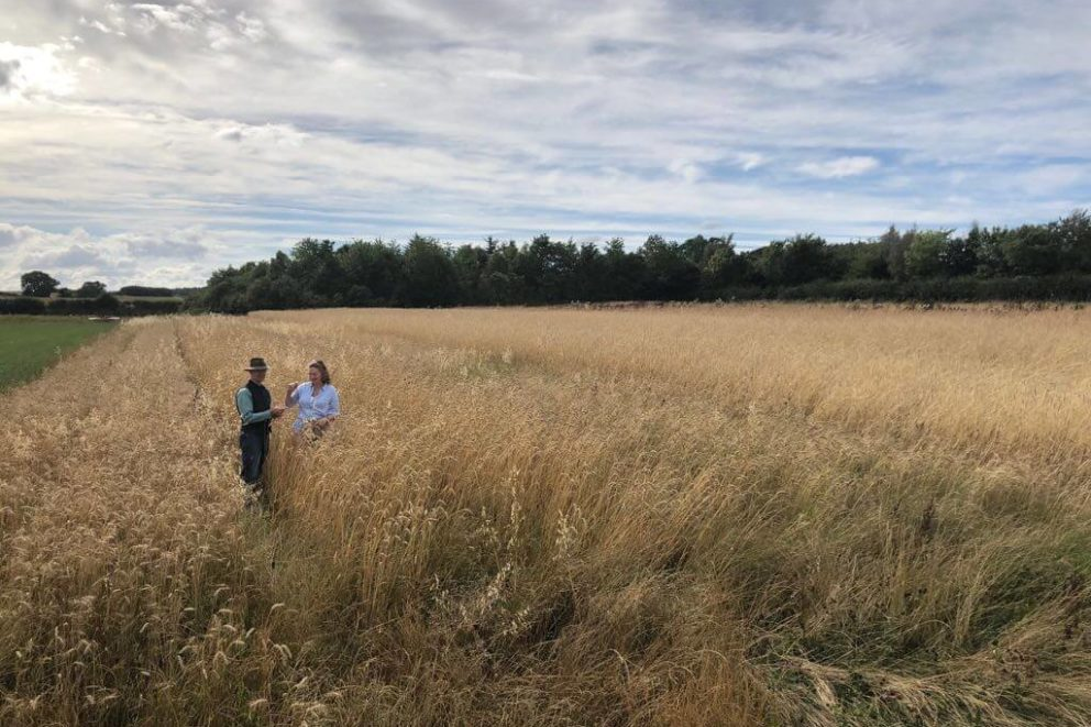 The Wilkinsons of Gilchester's Organics checking the heritage wheat fields on their farm.