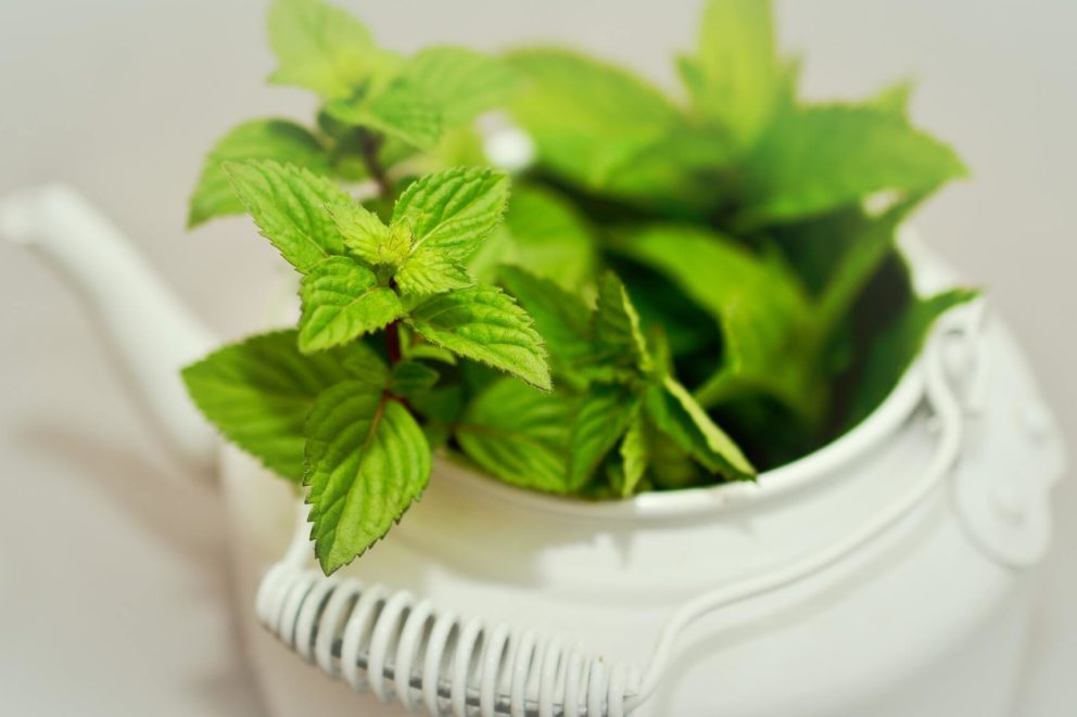 There are estimated to be around 15 mint varieties.