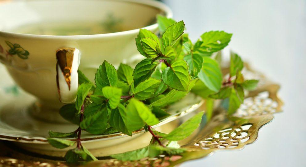 Fresh mint leaves for tea