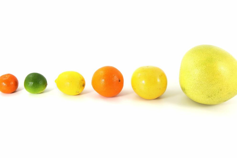 Line up of citrus fruits