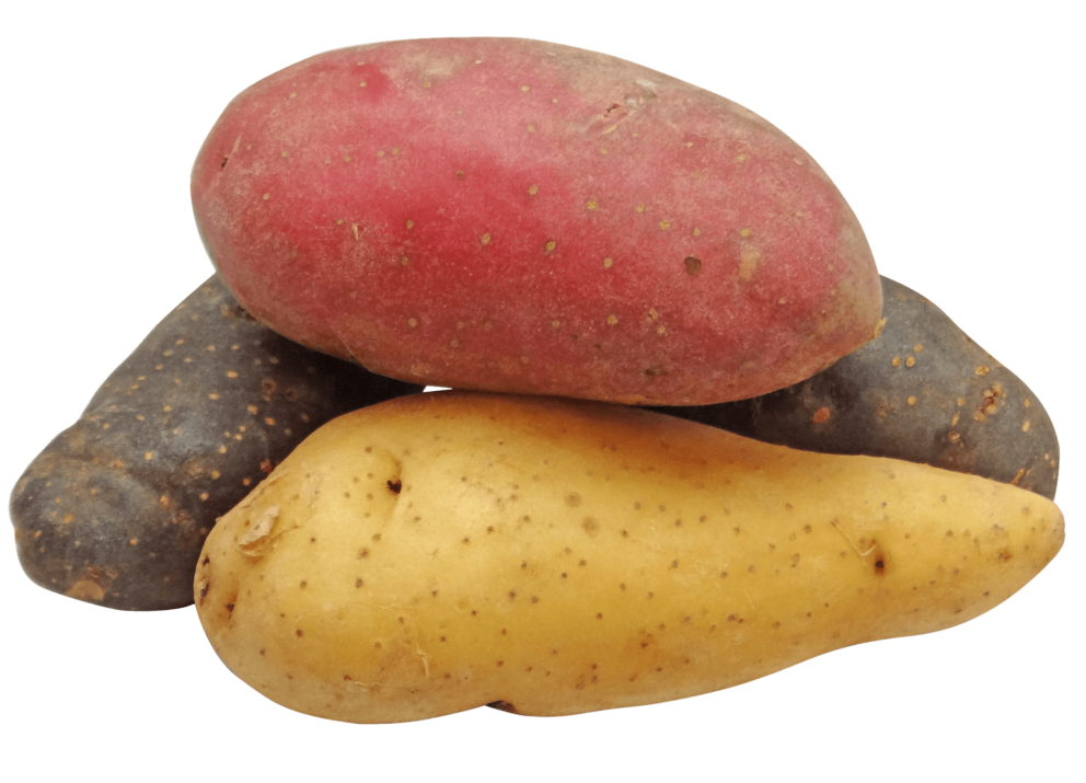 Different coloured fingerling potatoes