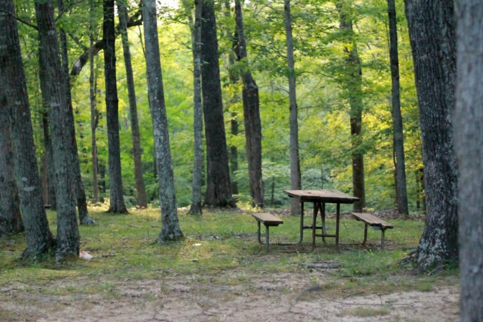 Picnic spot in woodland
